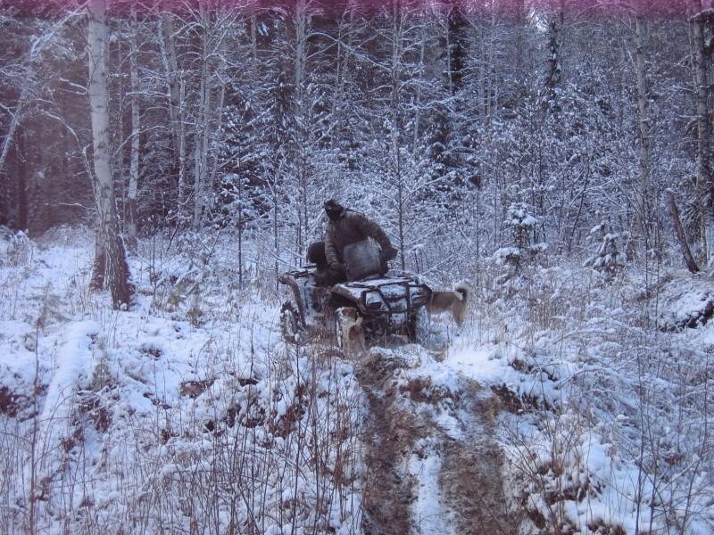 Квадроцикл для охотника