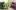 Битва за проходимость — сравнение Textron (Arctic Cat) Wildcat XX 2019 и Honda Talon 1000R