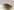 Очки кроссовые NENKI 1026 Mirror (Yellow) зеркальная линза